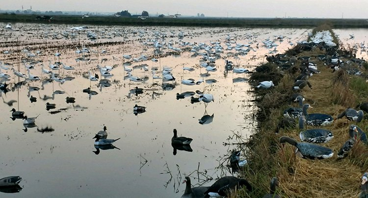 Duck and Goose Hunting Trips in the Sacramento Valley